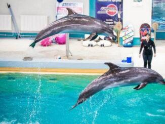 des dauphins robotiques